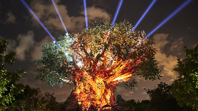 Tree of Life at night at Animal Kingdom